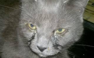 У котенка болит глаз чем лечить в домашних условиях