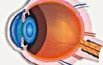 Все про лечение заболеваний глаз