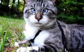 Косоглазие у котят причины и лечение