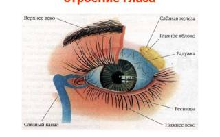 Болит голова в районе глаза и брови