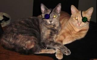 Как понять что у кошки болит глаз?