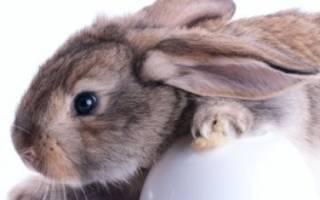 У кролика на глазу ячмень